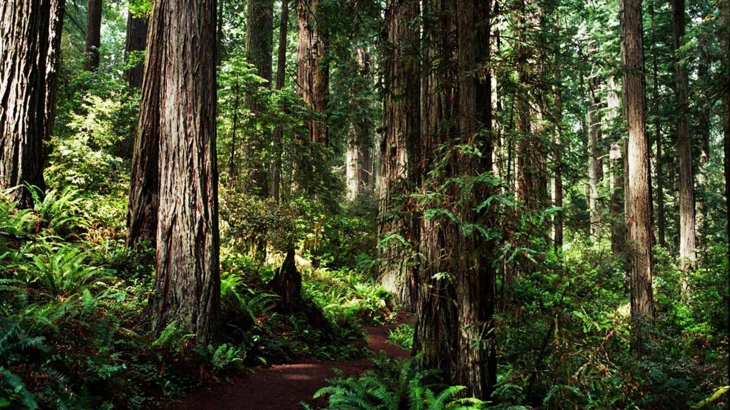 Endor Redwood National and State Parks