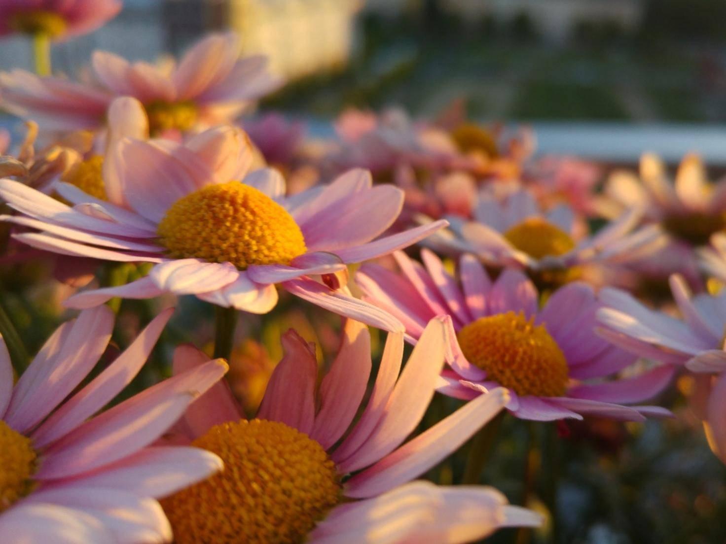 Auch Detailaufnahmen wirken scharf, wie die Blumen in der Abendsonne.