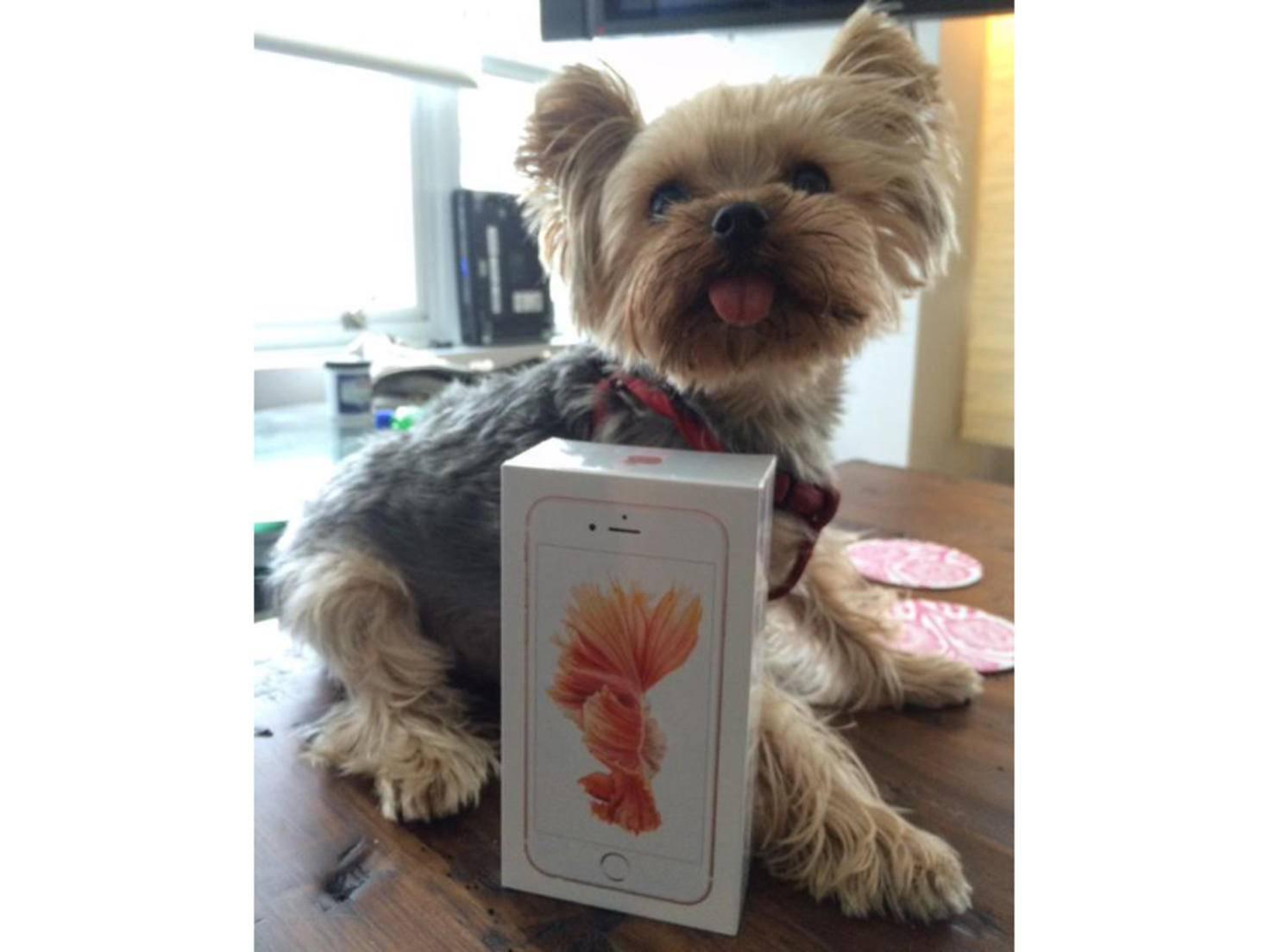 Das neue iPhone 6s von Adrienne Alpern (+ Hund).