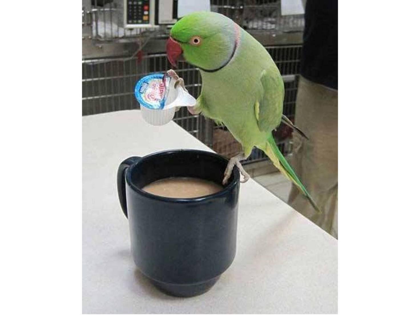 """""""Denkt an die Milch für meinen Kaffee!"""""""