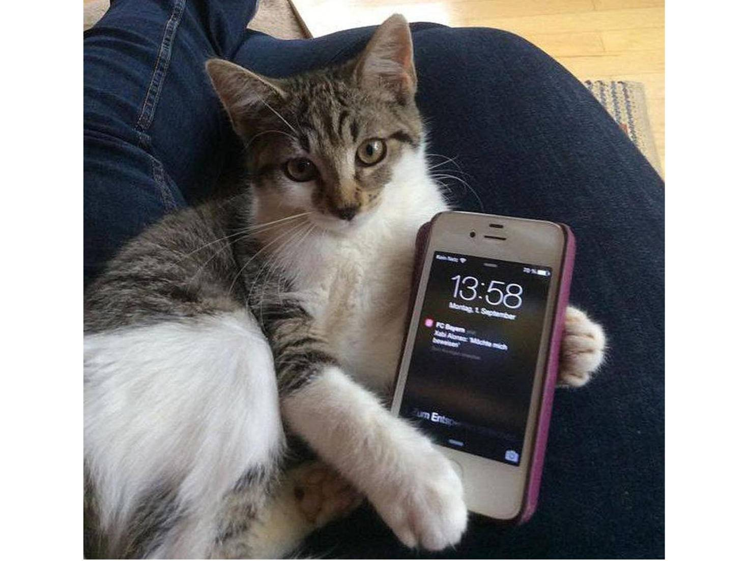 """""""... geh gefälligst an Dein Handy!"""""""