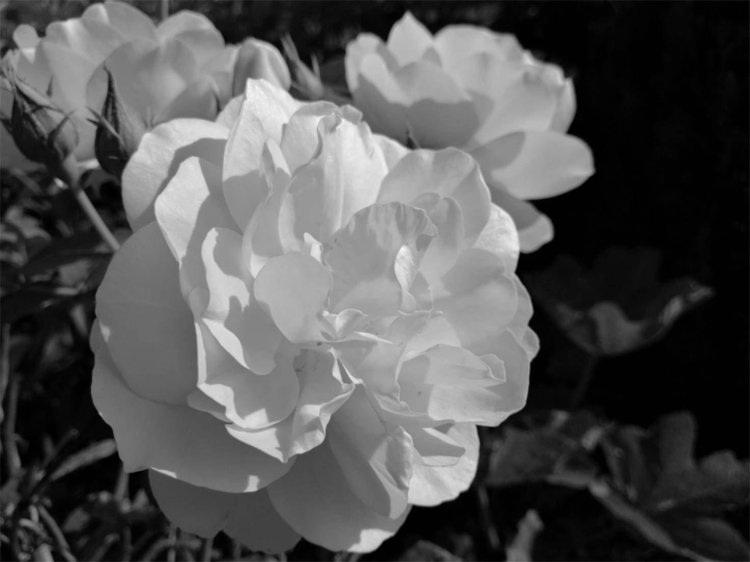 ... wie ihre Pendants in Schwarz-Weiß.