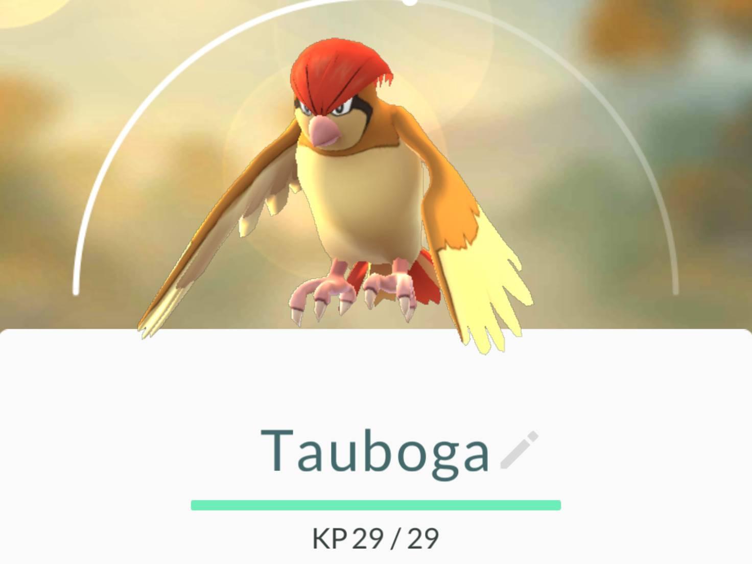 Tauboga_Pokemon