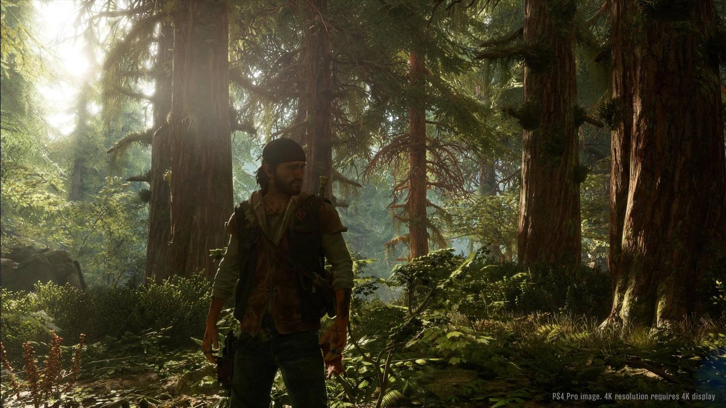 Days Gone Screenshot E3 2017 Wald