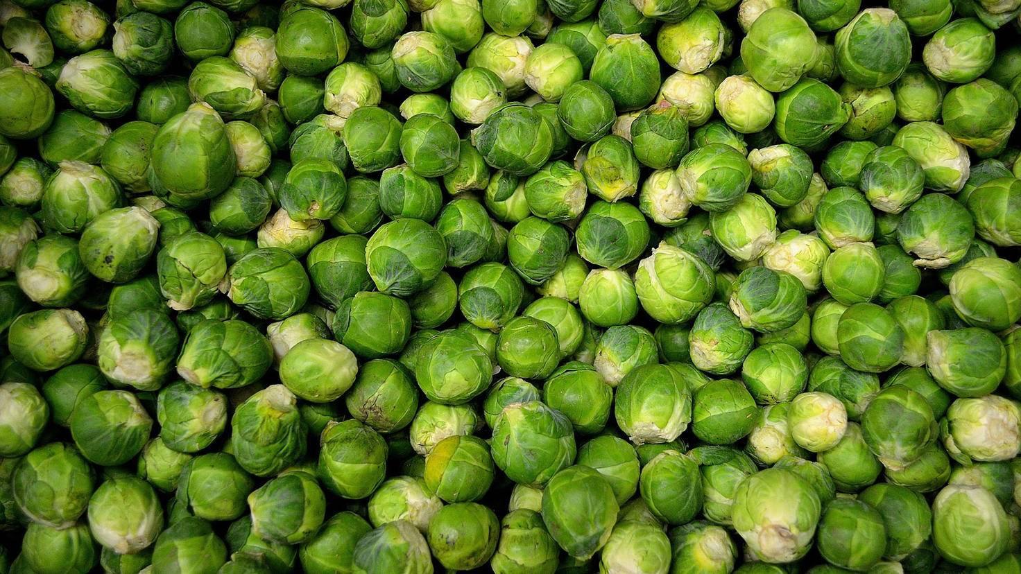 Rosenkohl und andere Kohlarten liefern jede Menge Einweiß und wichtige Vitamine.