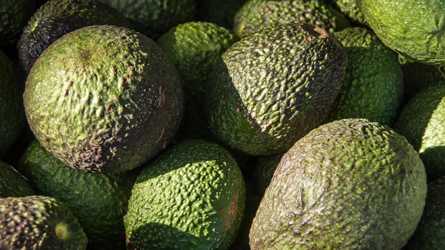 Nährstoffbomben: Avocados haben es im wahrsten Sinne des Wortes in sich.