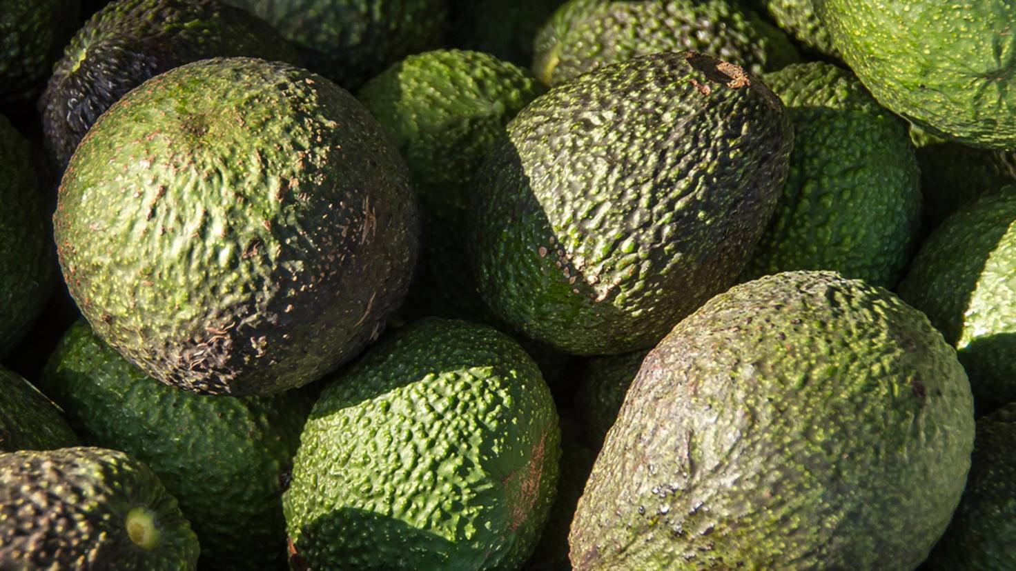 Avocados müssen oft noch nachreifen – das geht im Kühlschrank schlecht.