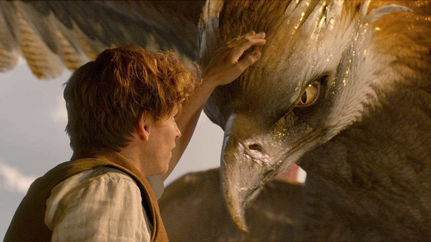Phantastische Tierwesen und wo sie zu finden sind: Szenenausschnitt