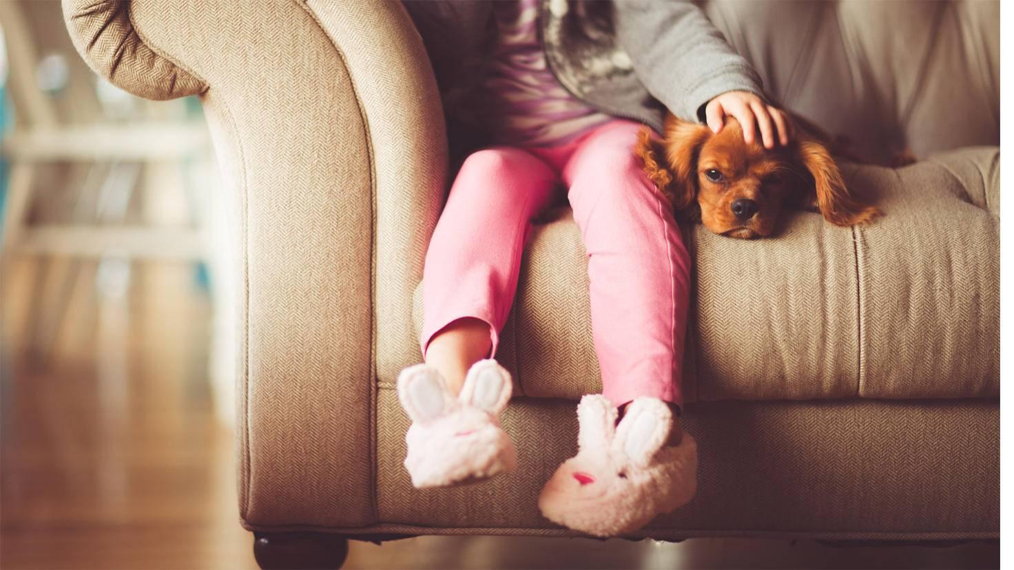 Haustiere: sehr süß, aber auch so haarig.