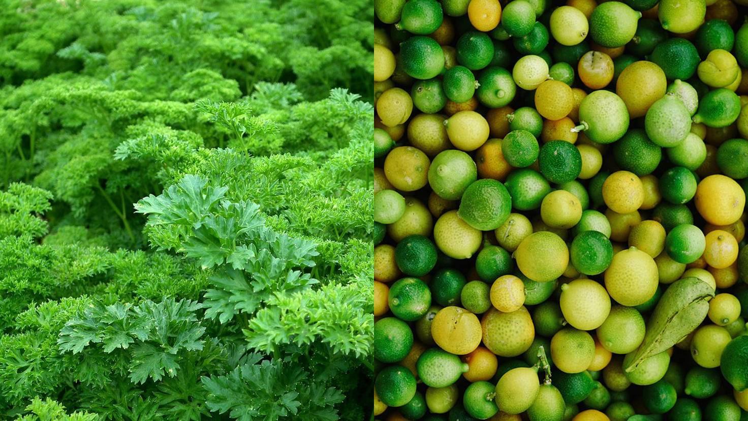 lemons parsley