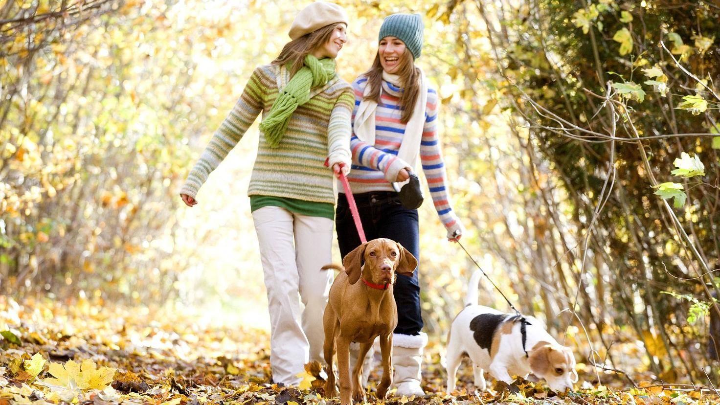 Ein Spaziergang tut immer gut.