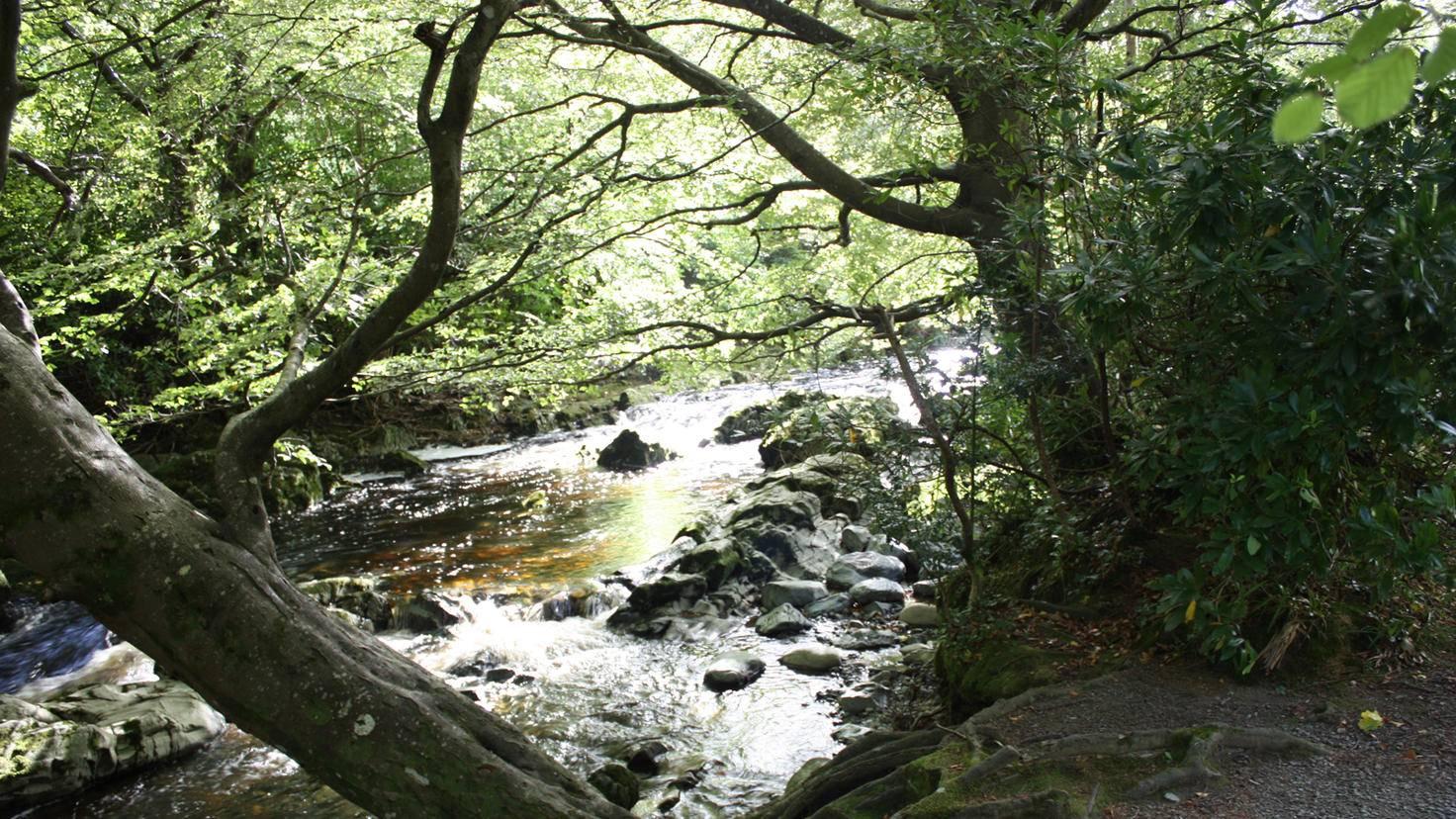 """Im Tollymore Forest Park tummeln sich die Schattenwölfe – aber nur, wenn der Wald als Drehort für """"Game of Thrones"""" genutzt wird."""