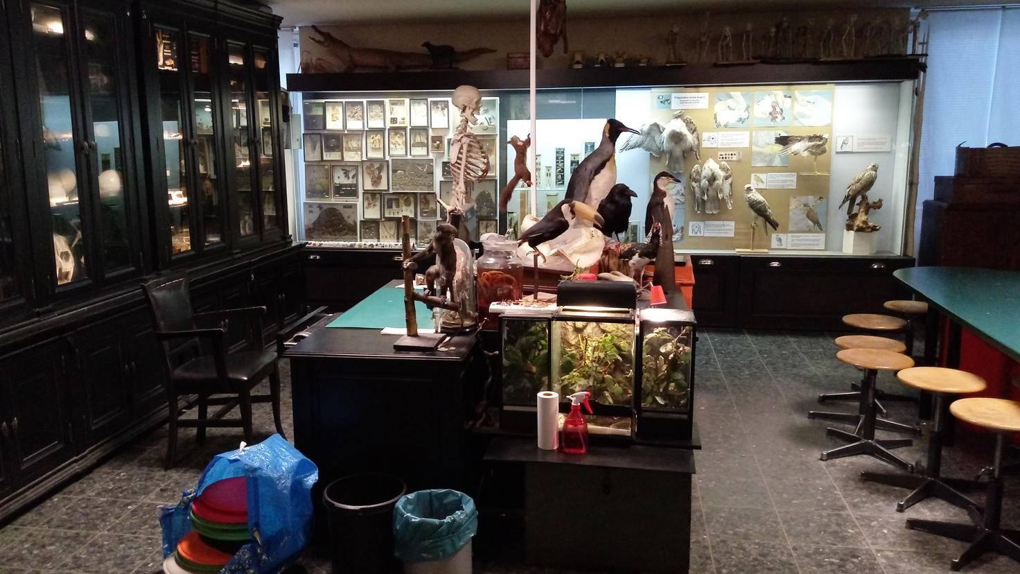 In Innenbereichen wie hier im Hamburger Naturkundemuseum gelingen bei guter Beleuchtung detailreiche Aufnahmen.