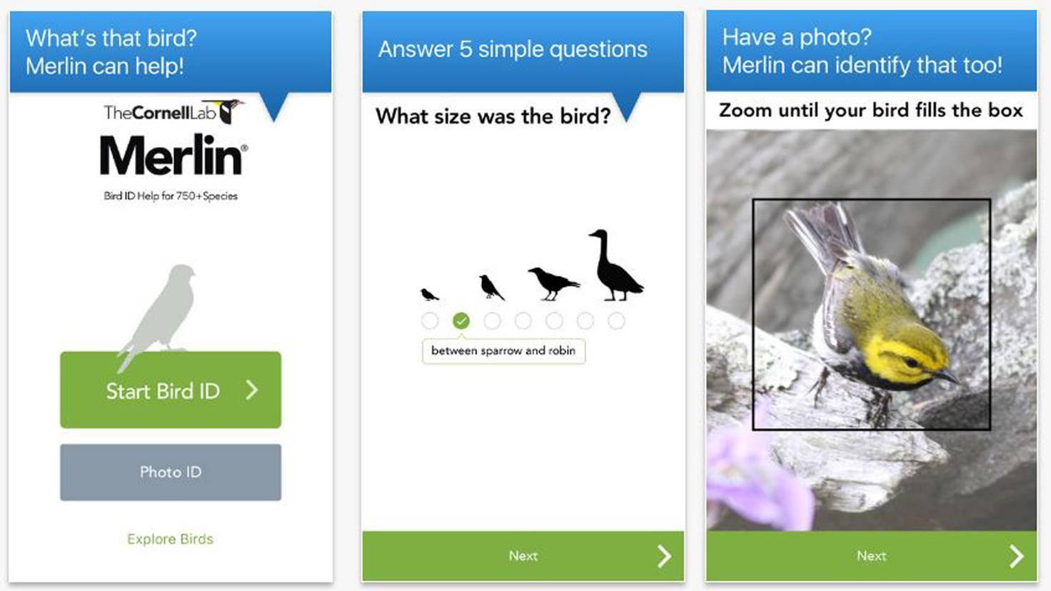 Merlin Bird ID-iTunes-Cornell Lab of Ornithology