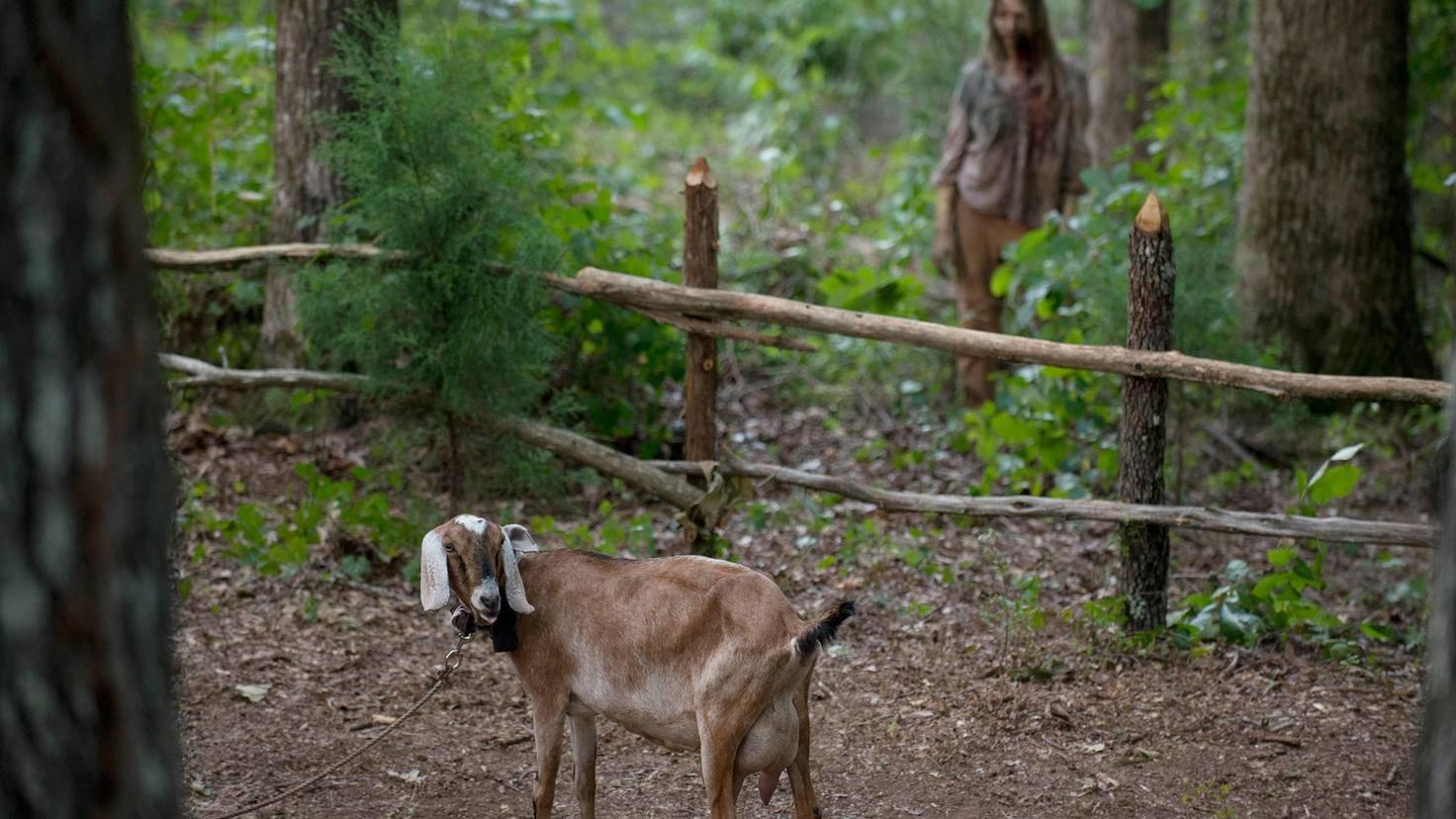 The Walking Dead_Gene Page-AMC-
