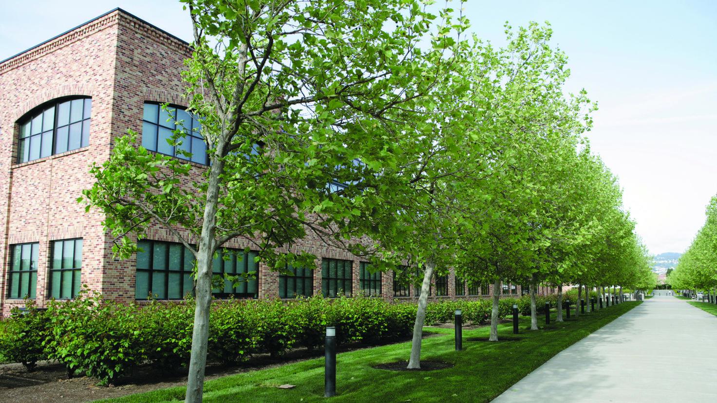 Weitläufig: Die Außenansicht der Pixar Animation Studios zeigt die Ausmaße des Firmengeländes.