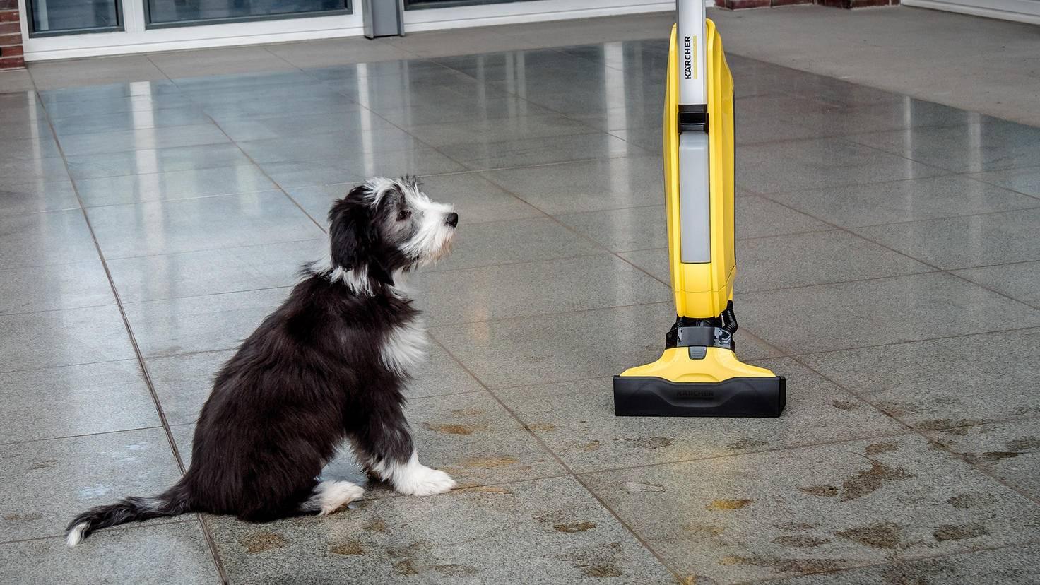 Wer einen Hund hat, kann von dem Anblick des Bodens ein Liedchen singen.