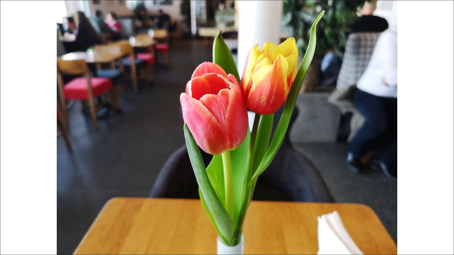 Die Kamera-KI sorgt für eine knallige Darstellung von Motiven wie Blumen.