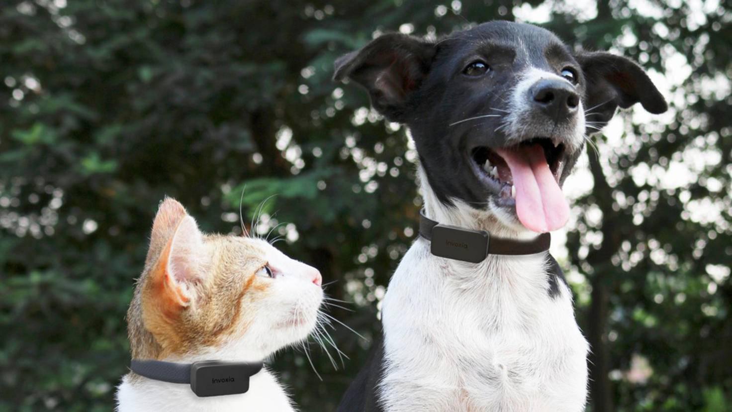 Invoxia Katze Hund