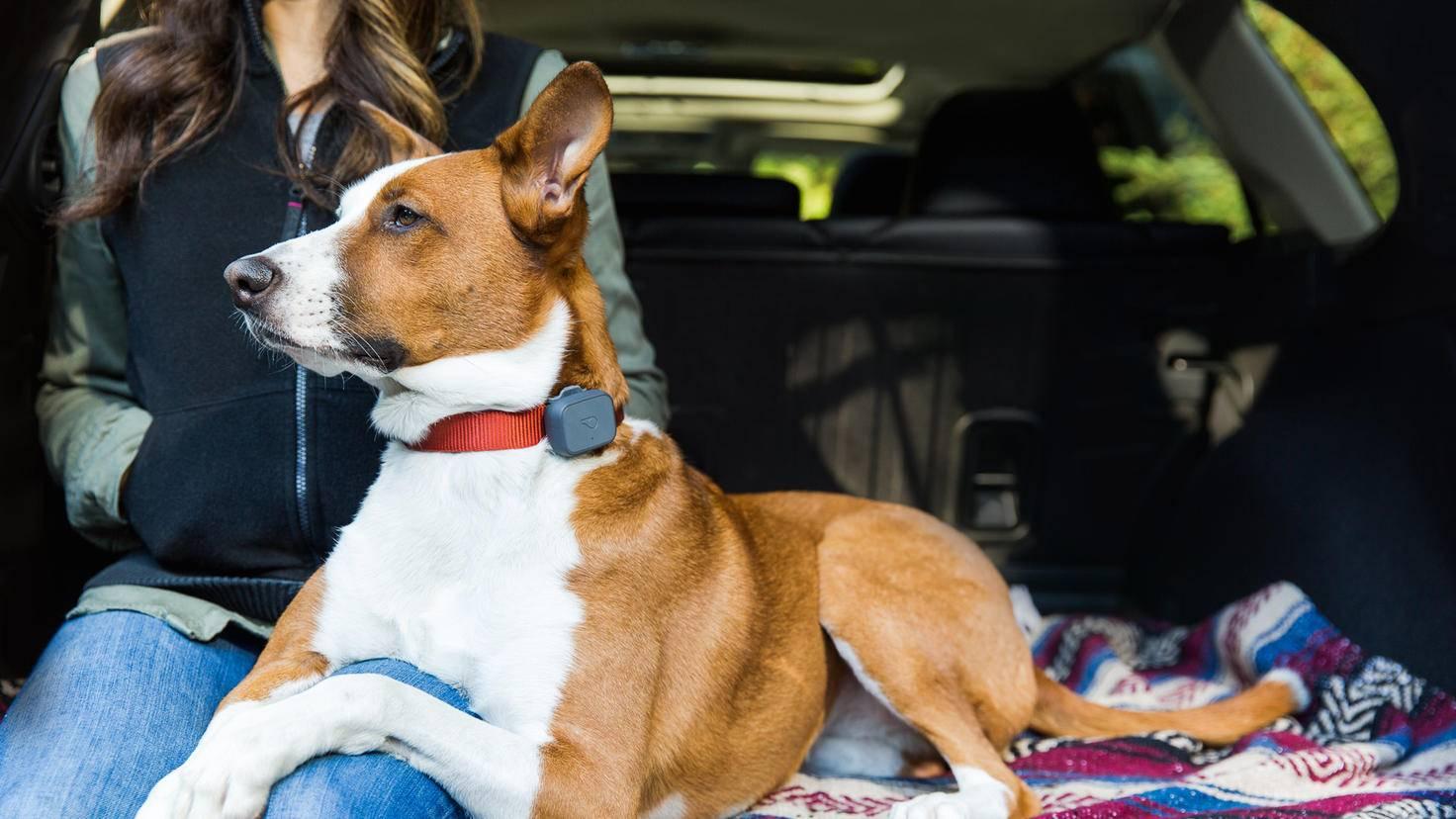 whistle 3 Hunde-tracker
