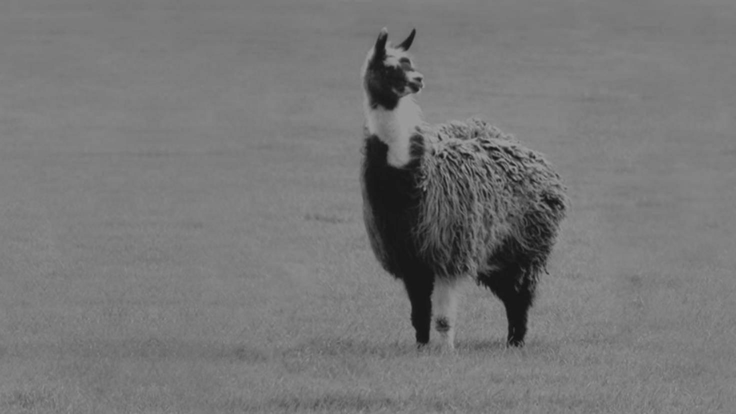 Winamp-Lama