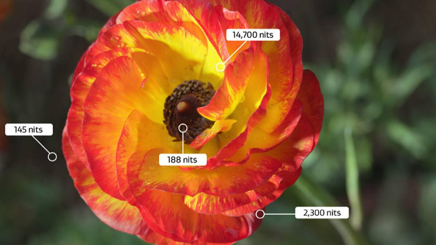 HDR-Dolby-Vision-Flower