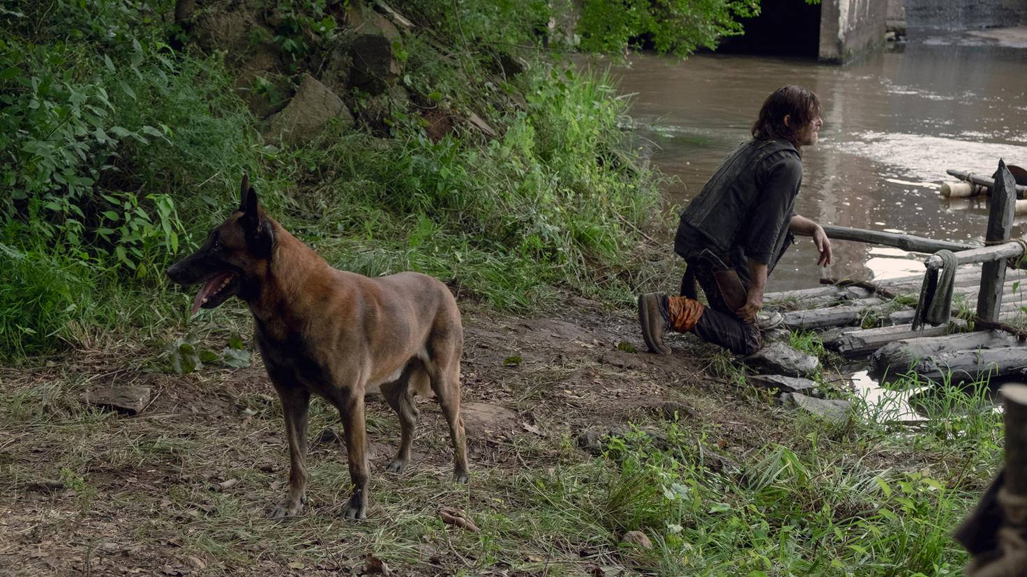 The Walking Dead-S09E07-Daryl-Hund-Gene Page-AMC