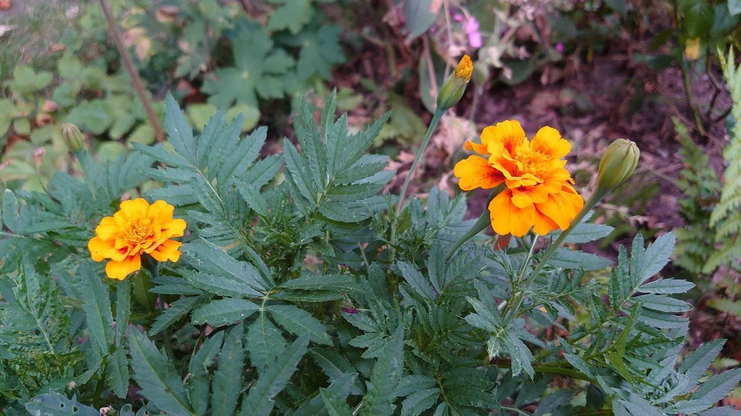 Blumen mit dem Sony Xperia 1