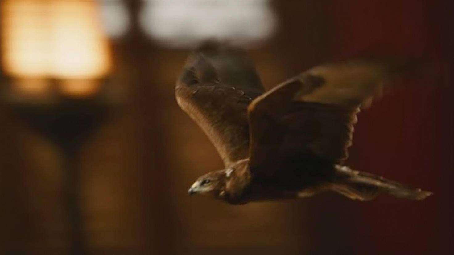 Die Kontrahentin kann sich in einen Falken verwandeln.