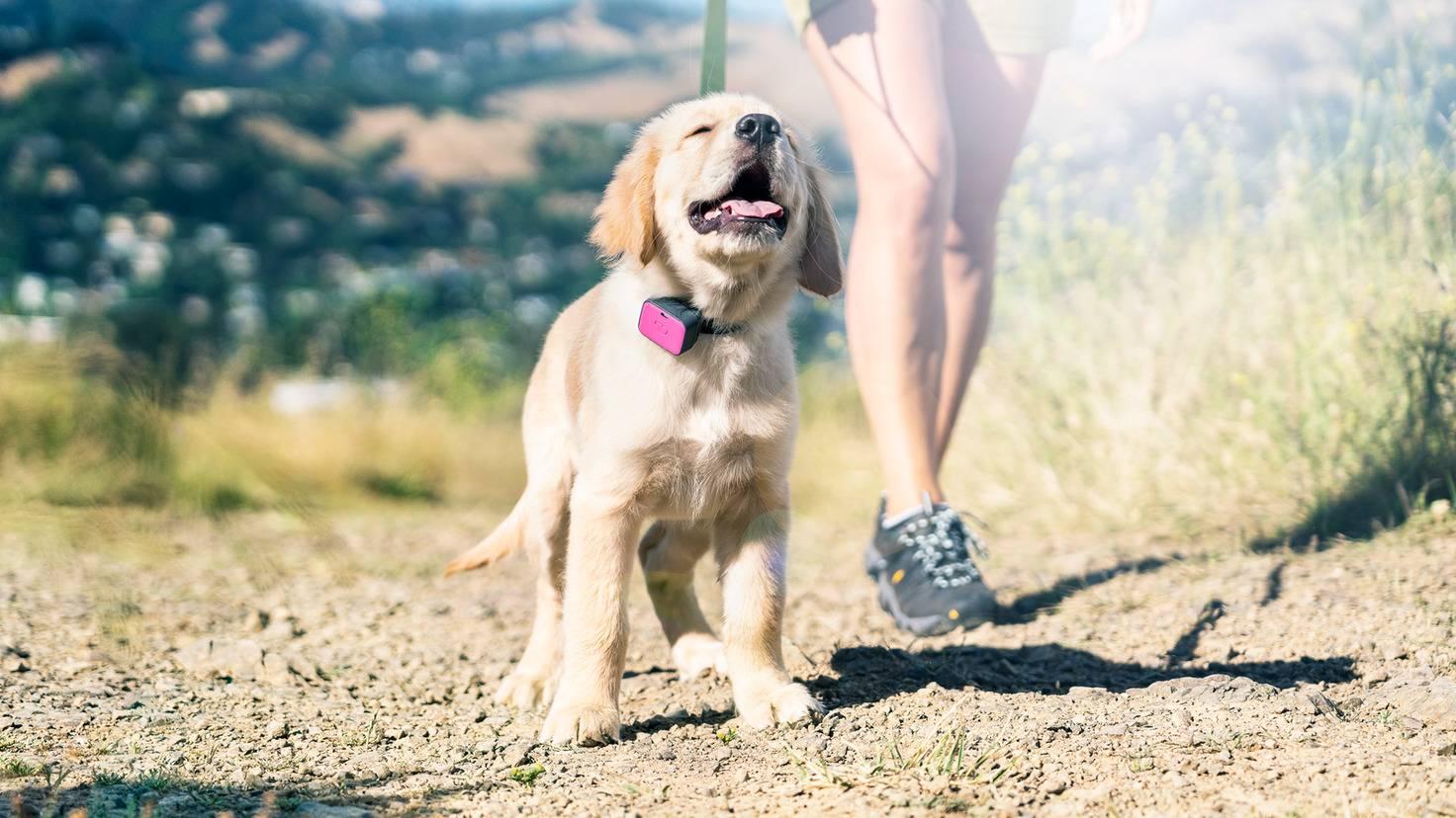 Der Tracker beachtet das Alter Deines Hundes und meldet, wenn der Kleine eine Pause braucht.