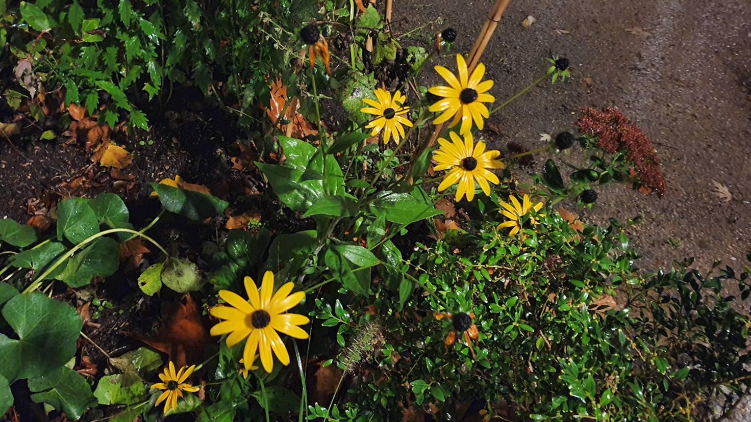 Galaxy Note 10 Blumen mit Nachtmodus