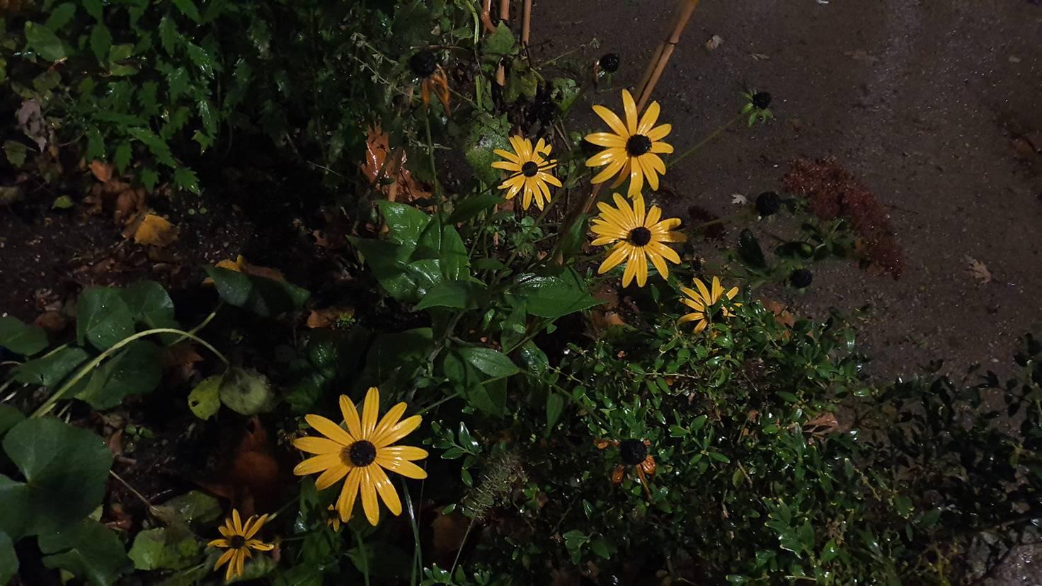 Galaxy Note 10 Blumen ohne Nachtmodus