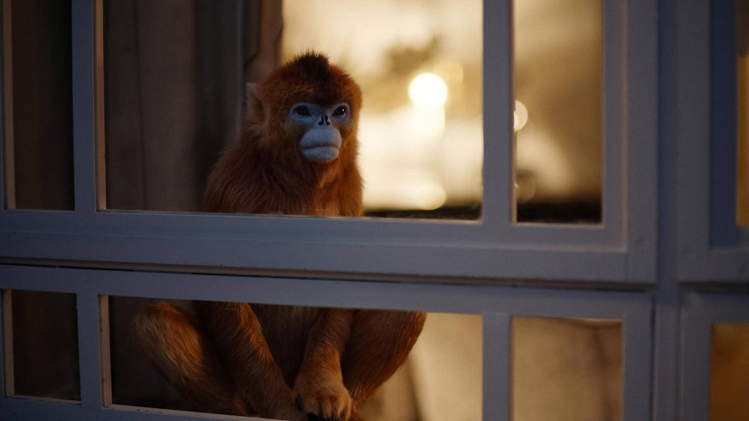 His Dark Materials: Der Affen-Daemon von Marisa Coulter