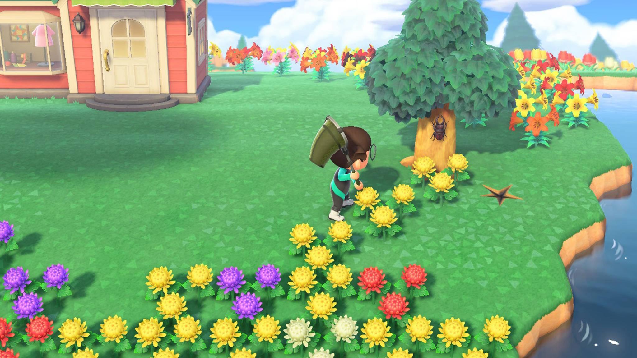 Animal Crossing New Horizons Käfer
