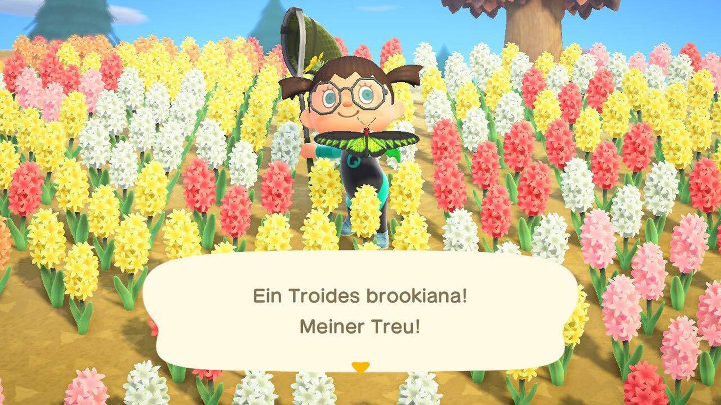 Animal Crossing New Horizons Troides