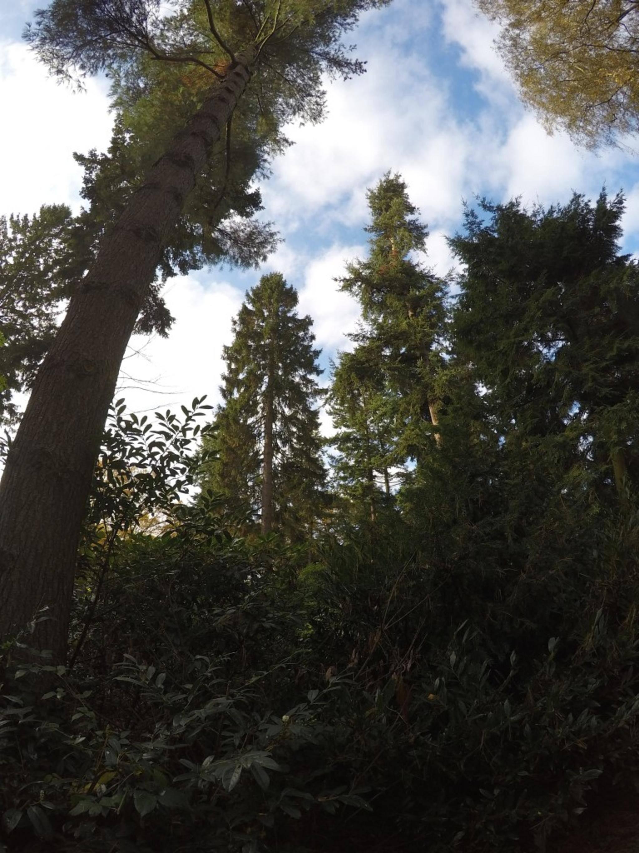 Die Krümmung ist charakteristisch für GoPro-Fotos.