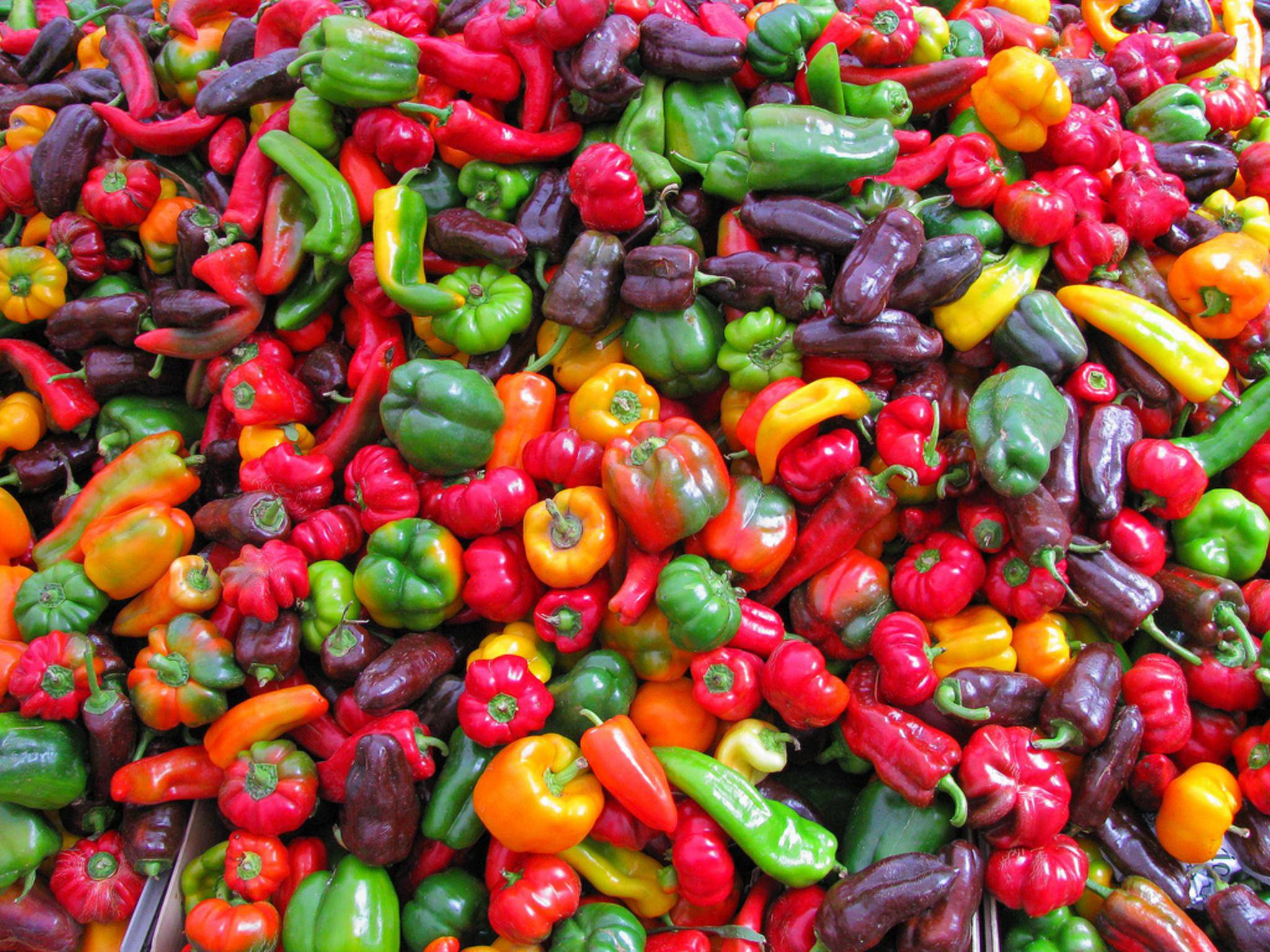 Frisch, lecker, knackig – perfekte Zutaten für vegetarische Rezepte