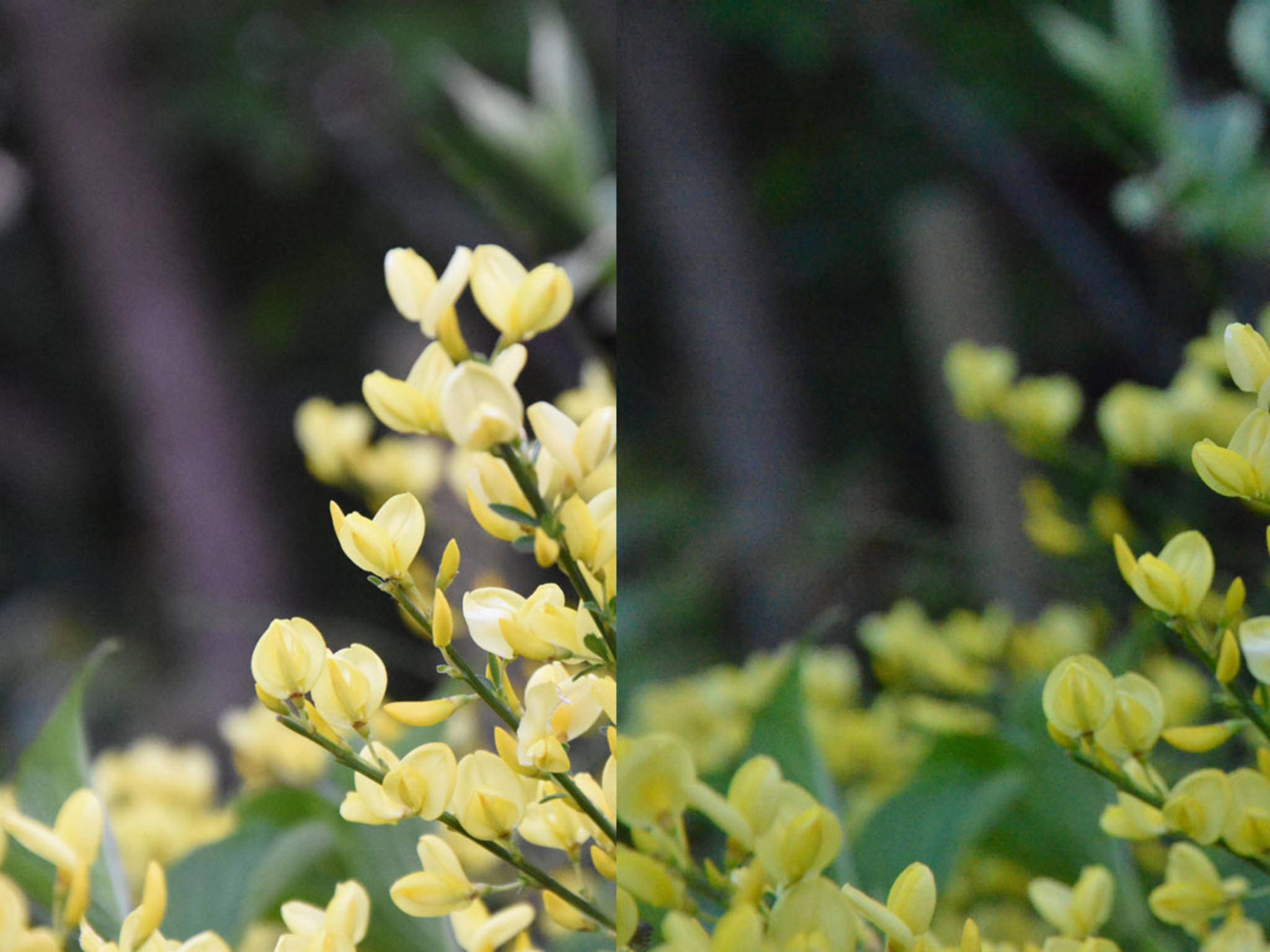 Der Vergleich: Links die Nikon D7200, rechts das Modell D7000. Bei ISO 6400 sind Farben und Rauschen beim neuen Modell deutlich besser.