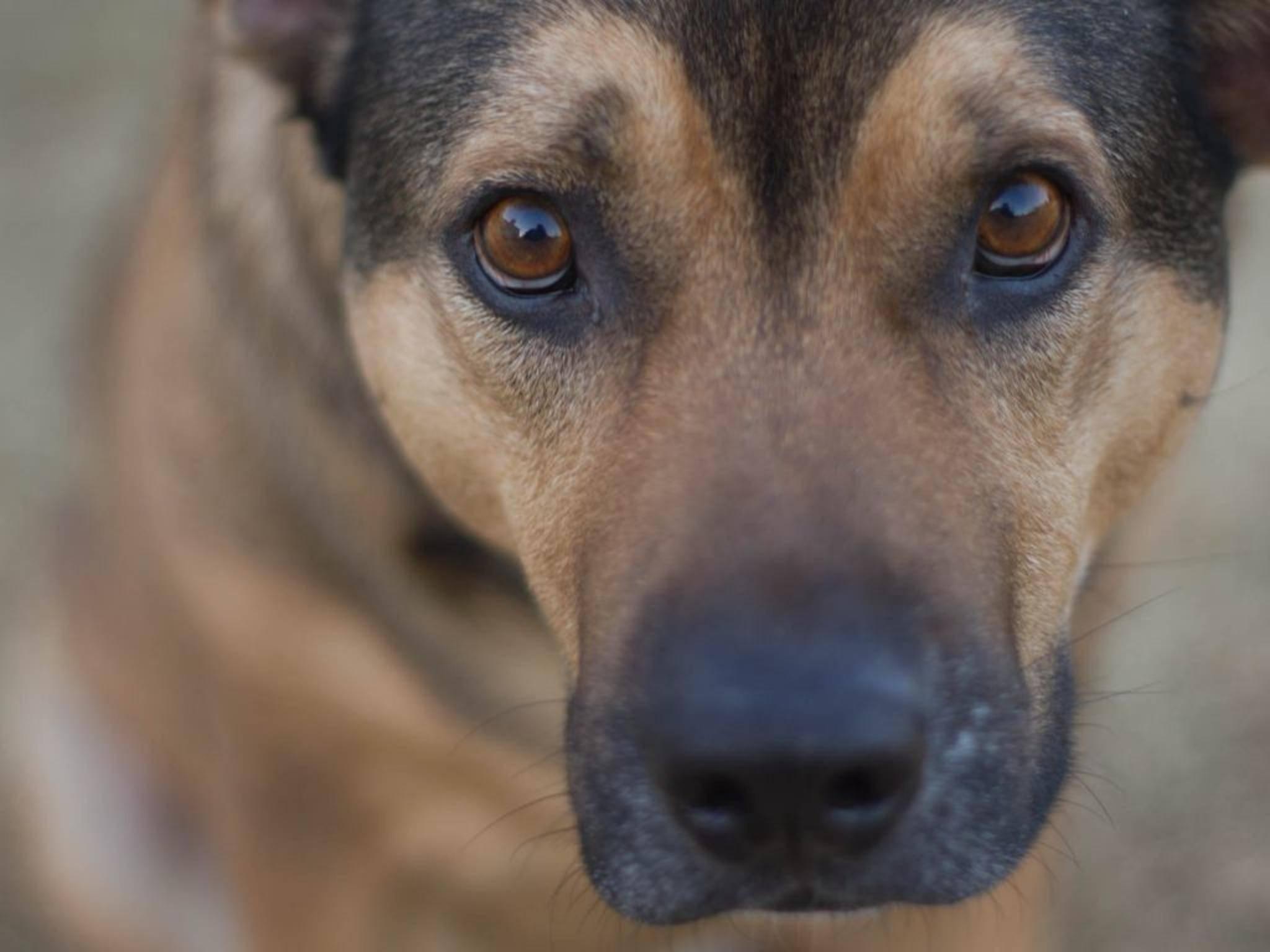 Die Augen sind das Fenster zur Seele – bei Tieren wie bei Menschen.