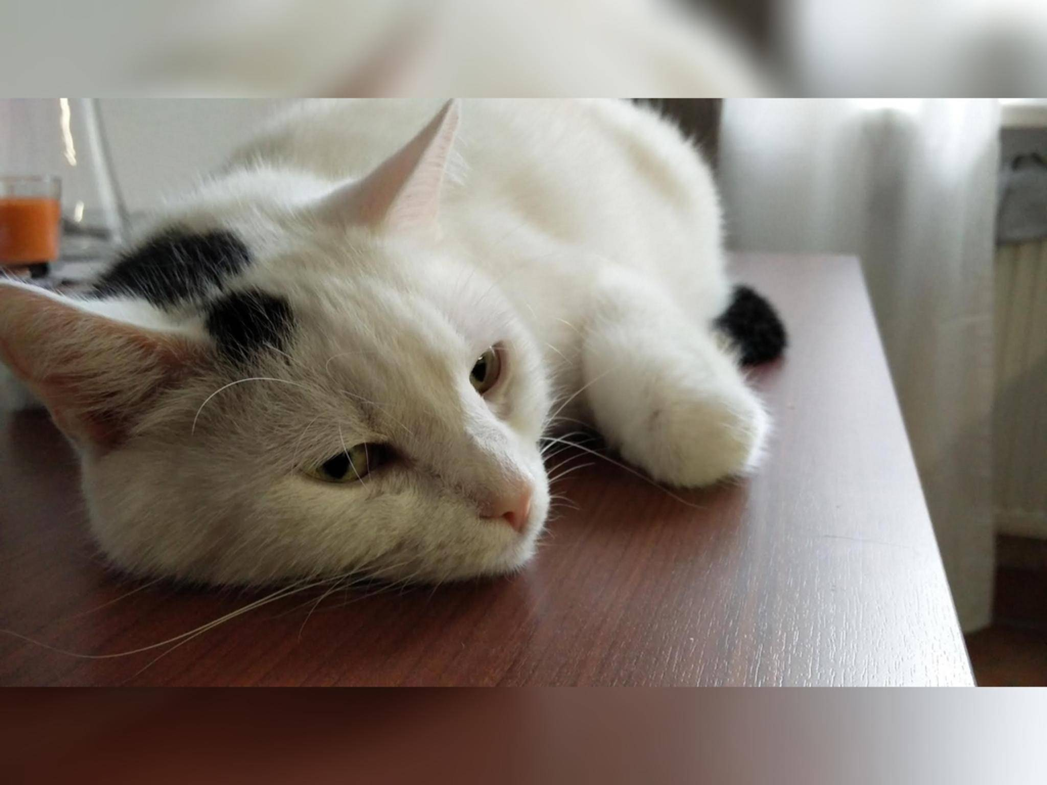 OnePlus2_Foto04