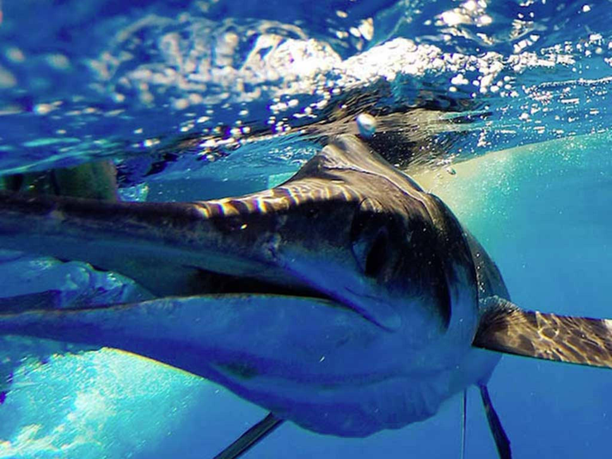 GoFish ist eine Kamera speziell für Angler.