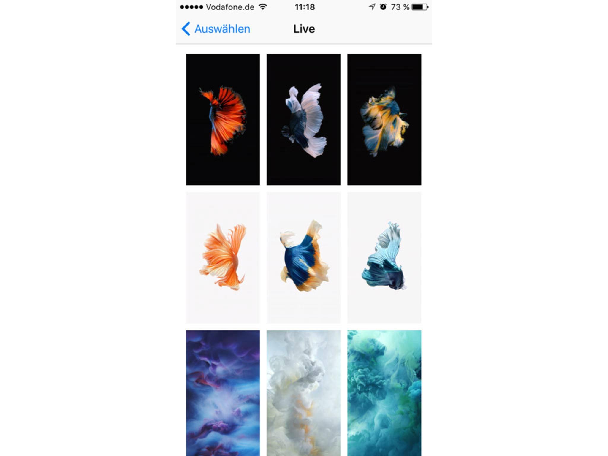 Live Photos lassen sich als Hintergrundbild nutzen, auch selbstaufgenommene Bilder.