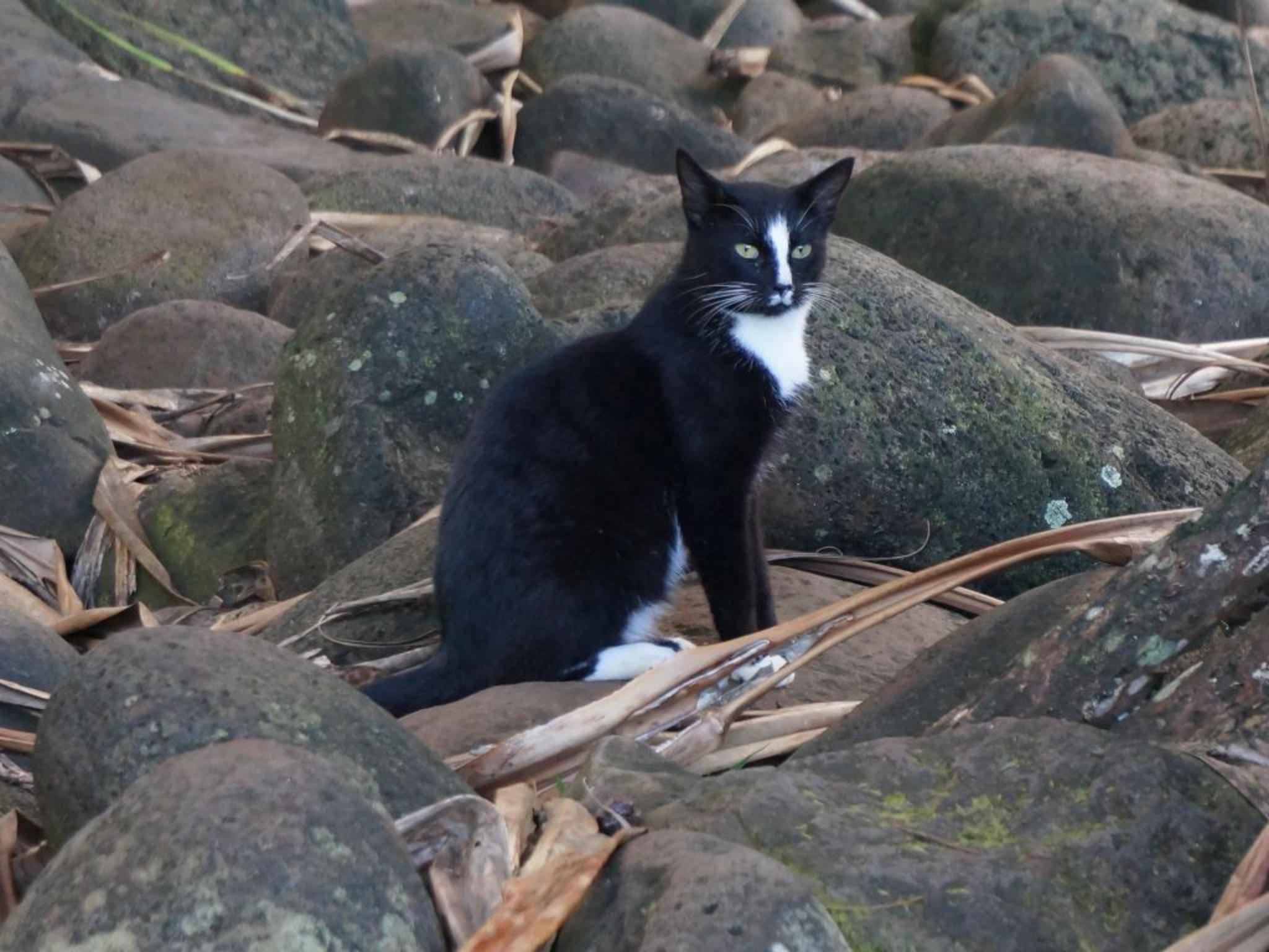 Um eine Katze in Normalperspektive abzubilden, musst Du Dich auf ihre Augenhöhe begeben.