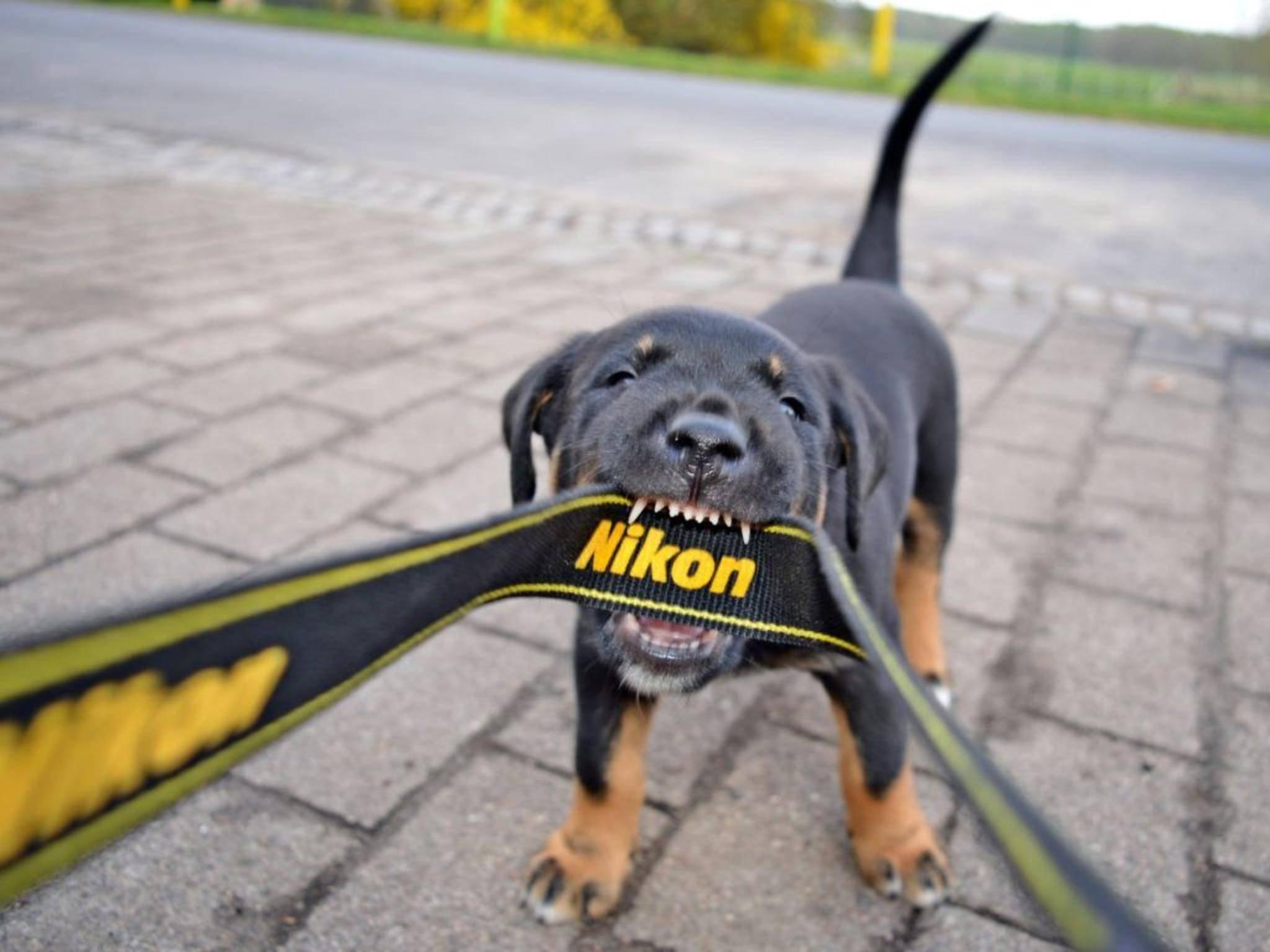 Nikon rüstet sich anscheinend für mehr Action im Jahr 2016.