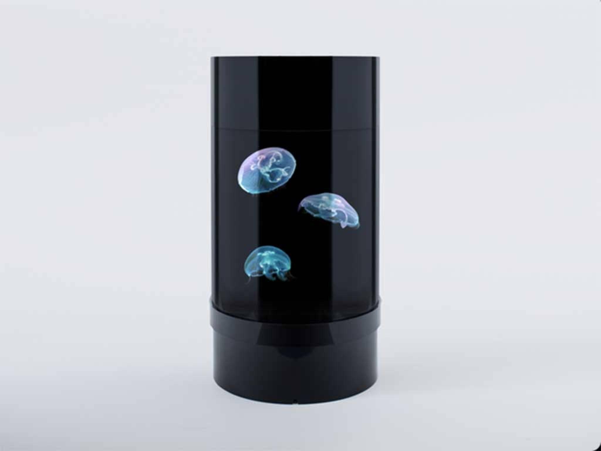 Das Quallen-Aquarium ist ein zylinderförmiger Tank ...