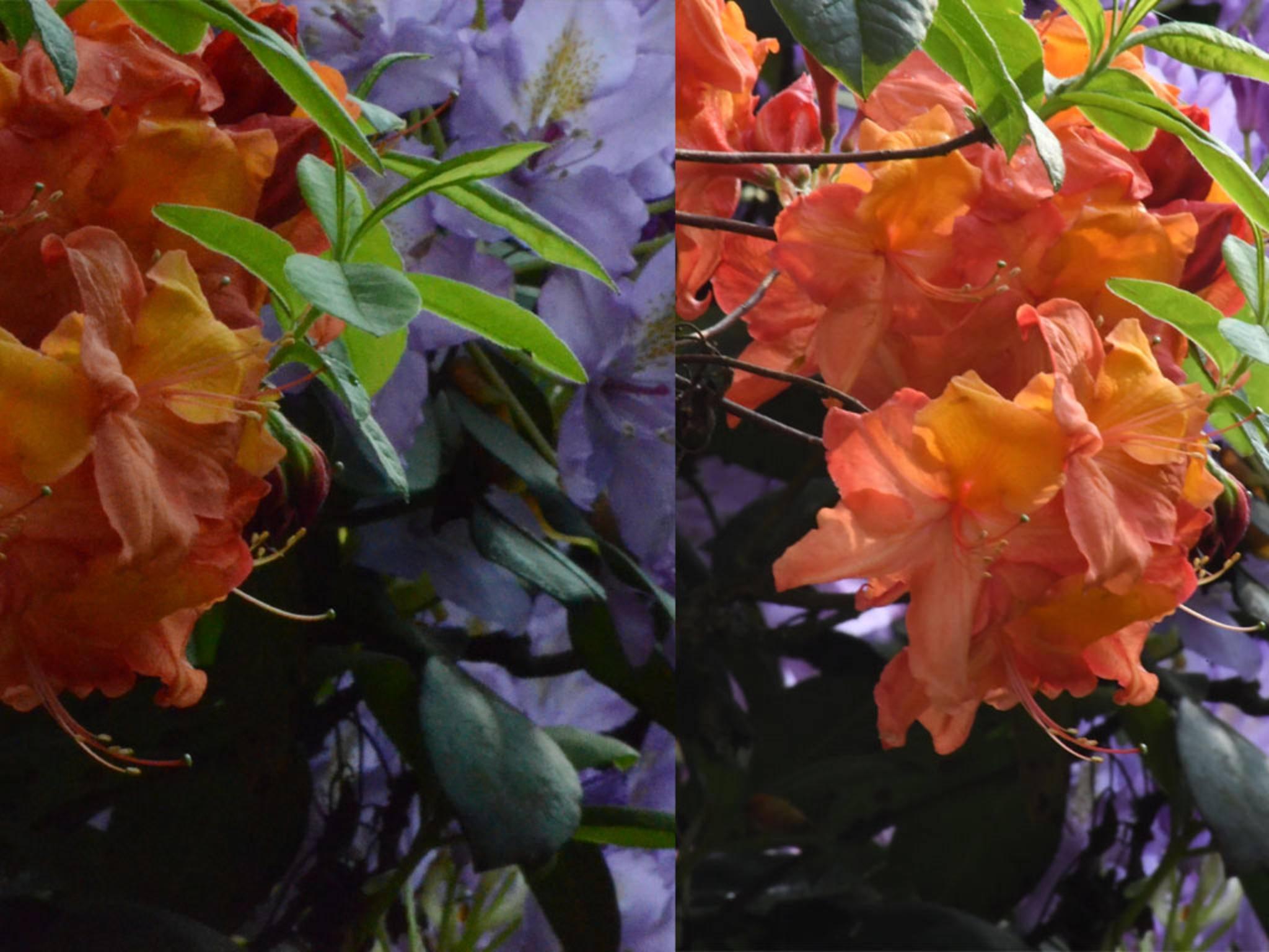 Bei der linken Aufnahme mit einer Nikon D7000 sieht man deutliches Rauschen, während die Nikon D5 bei ISO 6400 fast rauschfrei fotografiert.