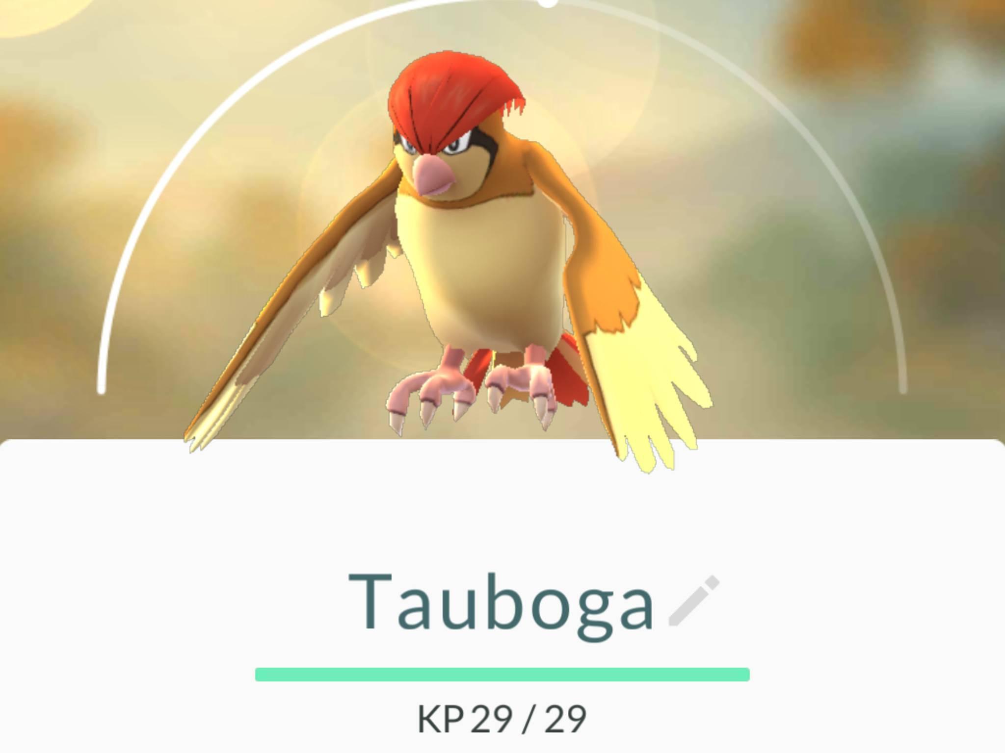 Nach dem ersten Entwicklungssprung wird aus Taubsi das Tauboga.