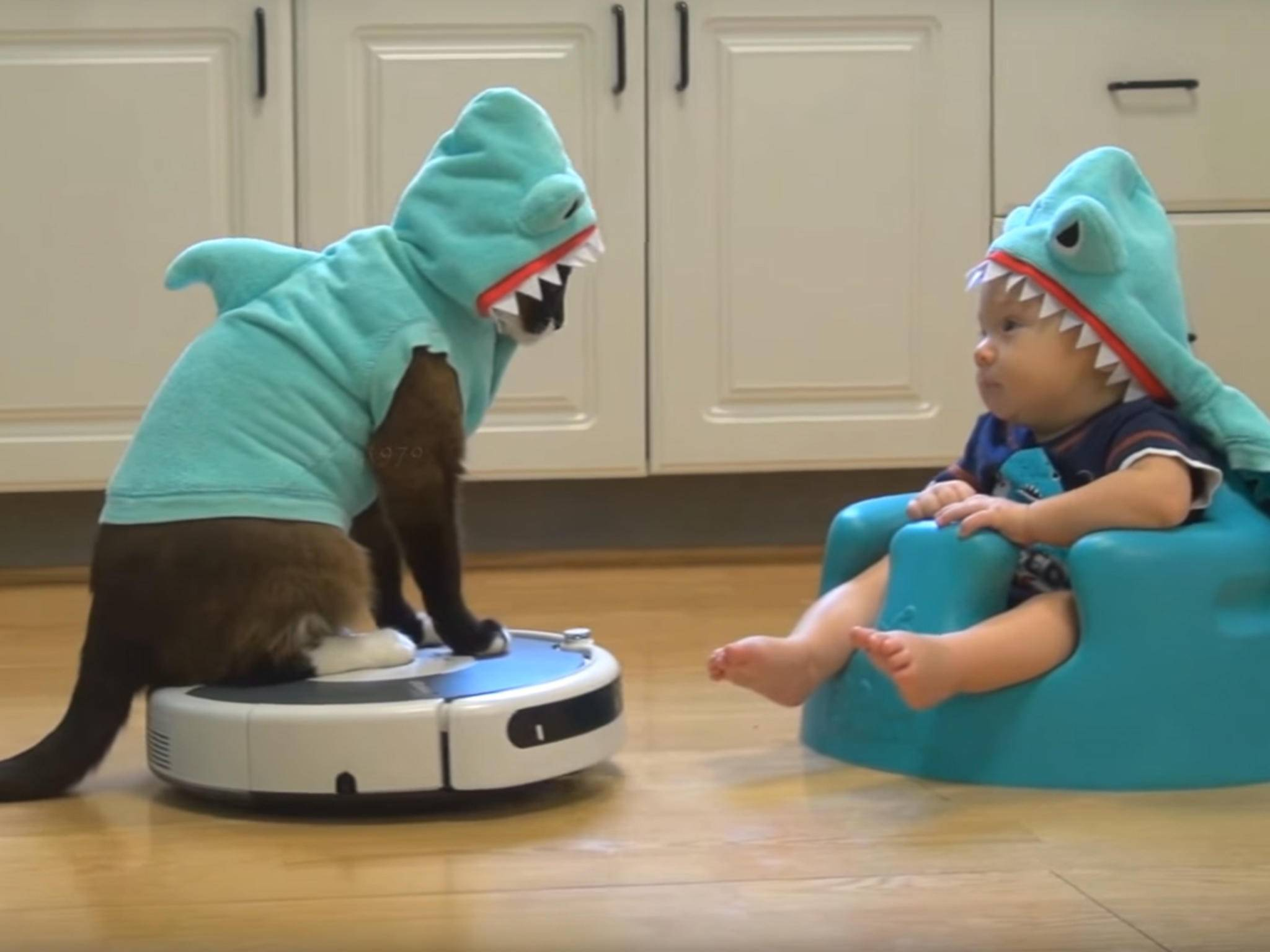 Katze Roomba