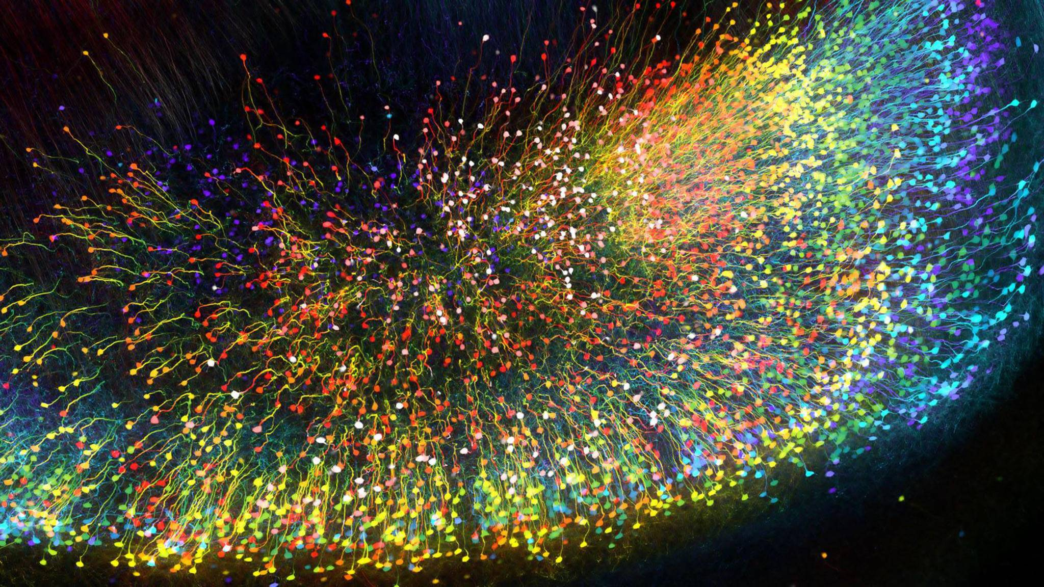 Eine fremde Galaxis? Nein! Dieses Foto zeigt einen Teil eines Mäusegehirns unter dem Mikroskop.