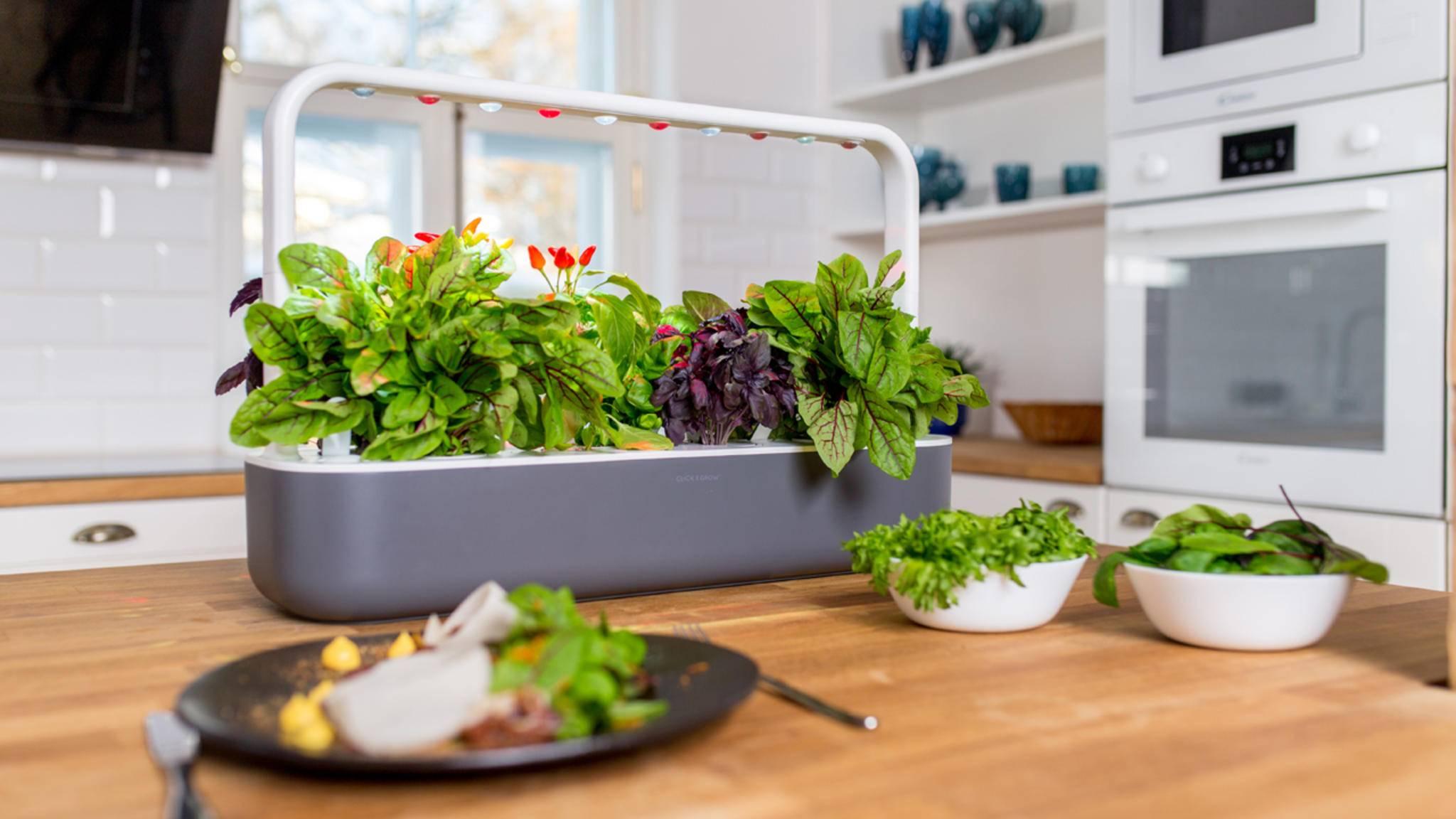 Grüne Fülle für Zuhause: Mit dem Smart Garden 9 wird Gärtnern zum Kinderspiel.